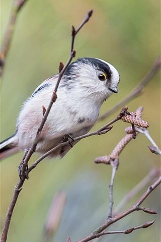 iPhone Wallpaper Long tail bird, twigs, tree