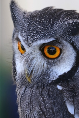 iPhone Wallpaper Owl close-up, predator
