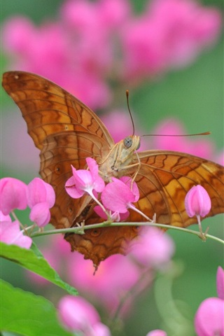 iPhone Wallpaper Pink flowers, butterfly, insect, blurry background