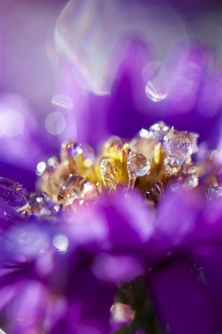 iPhone Wallpaper Purple flower petals close-up, flowering, dew