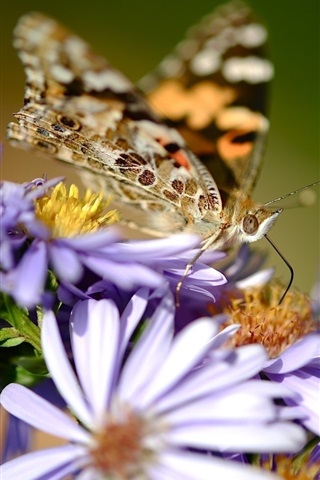 iPhone Wallpaper Purple flowers, butterfly, wings, blurry background
