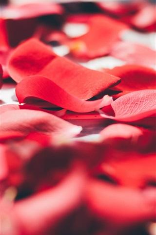 iPhone Wallpaper Red rose petals macro photography, romantic