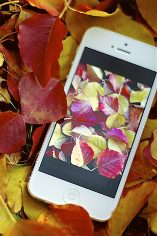 iPhone Wallpaper Red yellow leaves, autumn, iPhone