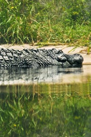 iPhone Wallpaper Reptile, crocodile, lake