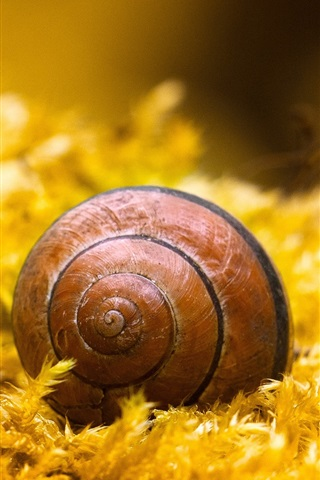iPhone Wallpaper Snail, insect, yellow grass