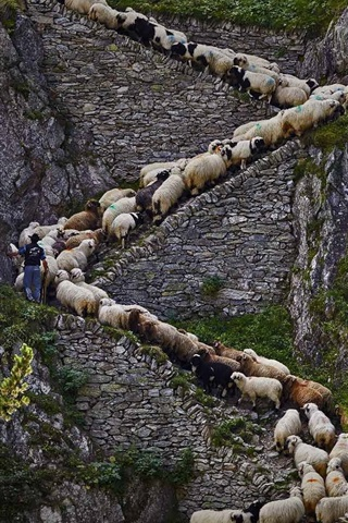 iPhone Wallpaper Steep stone stairs, sheep, cliff
