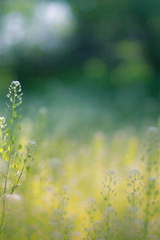 iPhone Wallpaper Summer, wildflowers, grass, bokeh