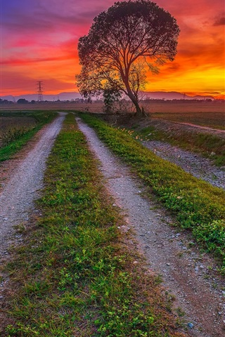 iPhone Wallpaper Sunset, fields, road, trees, dusk