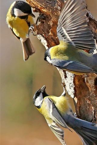 iPhone Wallpaper Three birds, tit, tree