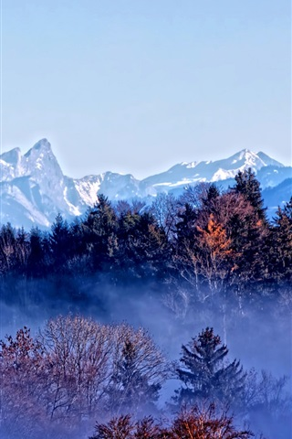iPhone Wallpaper Trees, mountains, autumn, fog, dawn
