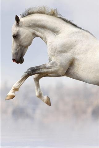 iPhone Wallpaper White horse fast run