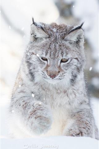 iPhone Wallpaper Wild cat, winter, snow, lynx
