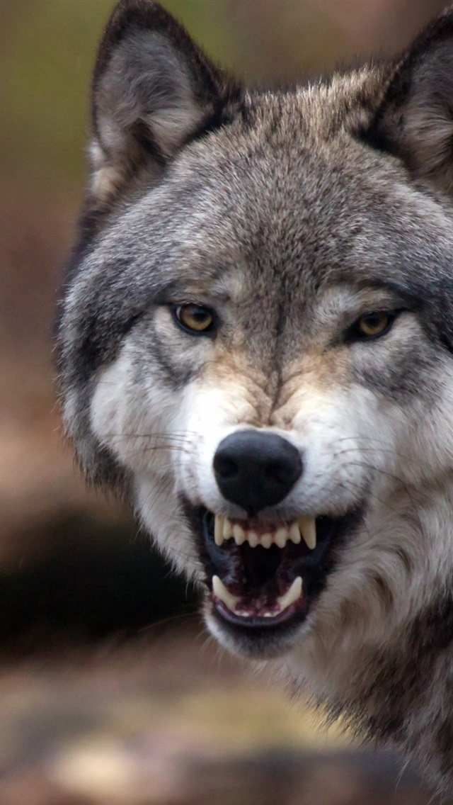 Wolf Close Up Grin Angry Forest 750x1334 Iphone 8766s