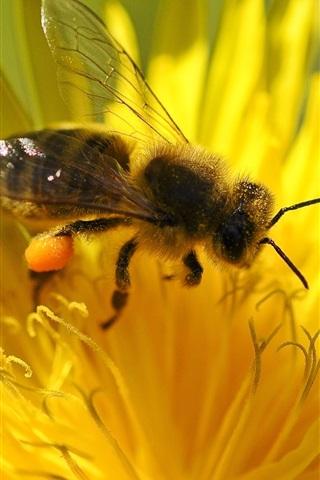 iPhone Wallpaper Yellow flower petals, bee, pistil