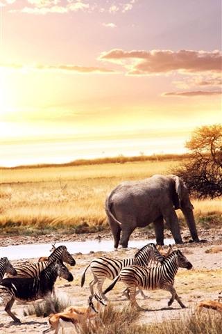 iPhone Wallpaper African, animals, elephant, zebra, deer, trees, sunset