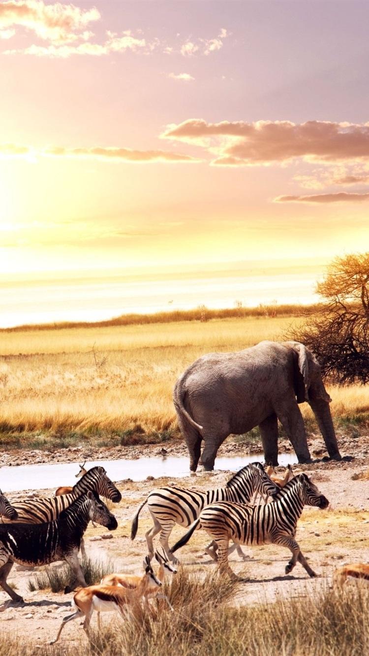 アフリカ 動物 象 ゼブラ 鹿 木 夕日 750x1334 Iphone 8 7 6 6s 壁紙 背景 画像