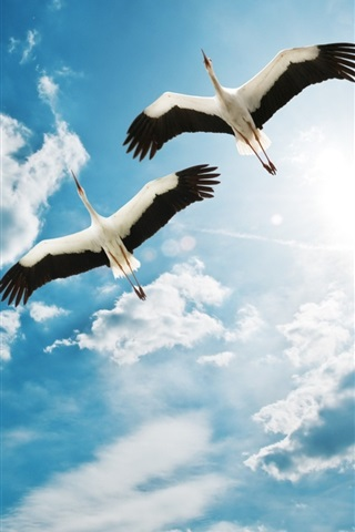 iPhone Papéis de Parede Pássaro, dois, guindastes, voando, céu, nuvens