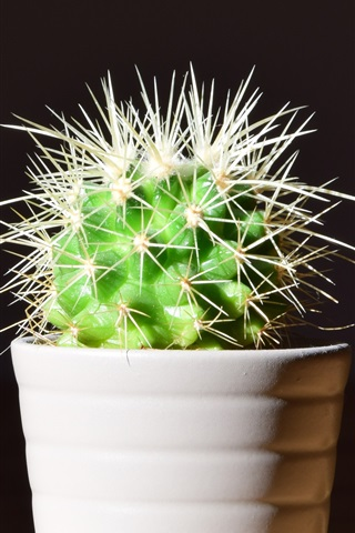 iPhone Wallpaper Cactus, thorns, houseplant