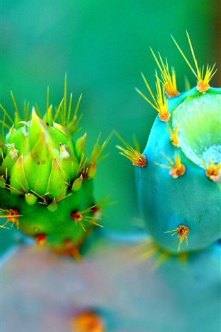 iPhone Wallpaper Cactus three different flowers