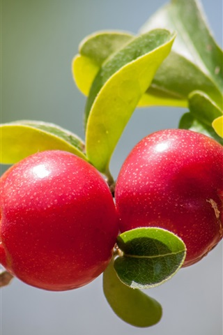 iPhone Wallpaper Cherries, twigs