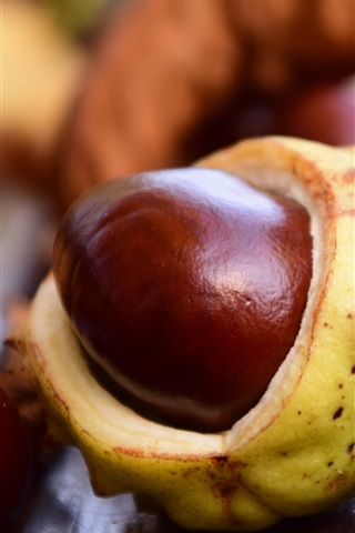 iPhone Wallpaper Chestnut close-up