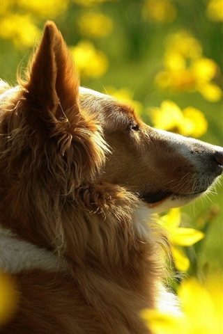 iPhone Wallpaper Dog and yellow flowers