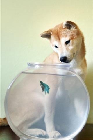 iPhone Wallpaper Dog look at aquarium fish