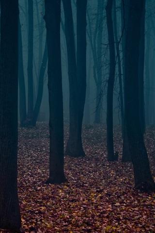 iPhone Wallpaper Dusk, forest, trees, fog, leaves