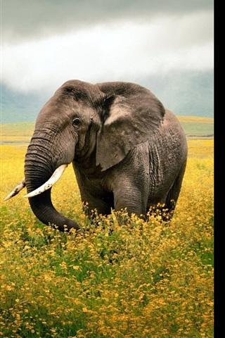 iPhone Wallpaper Elephant walk in the flowers