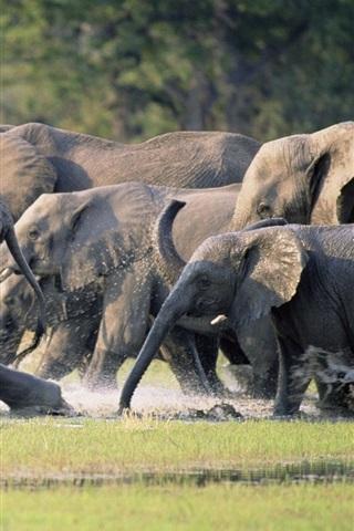 iPhone Wallpaper Elephants family