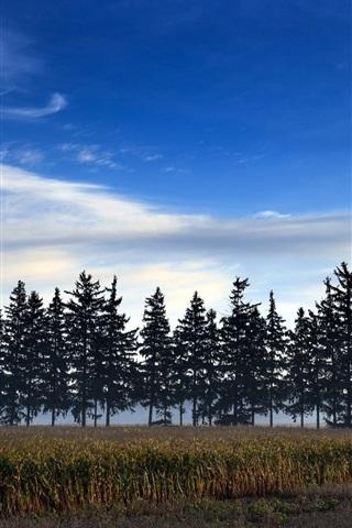 iPhone Wallpaper Fields, trees, dusk