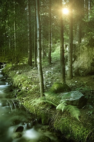 iPhone Wallpaper Forest, stream, sun