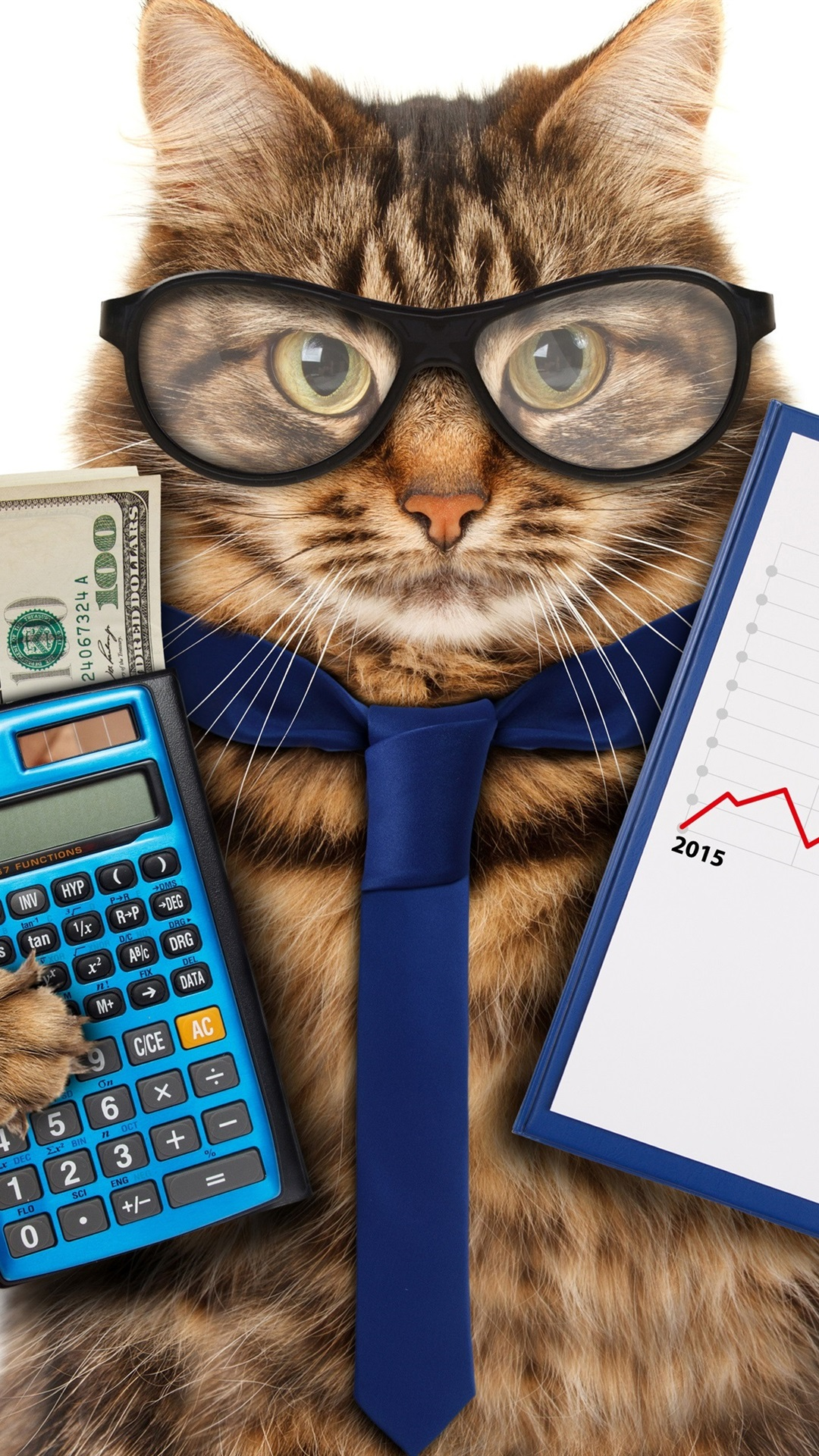 Funny Animals Cat Glasses Tie Calculator Money Accountant 1080x1920 Iphone 8 7 6 6s Plus Wallpaper Background Picture Image,Hacks Space Saving Ideas For Small Apartments