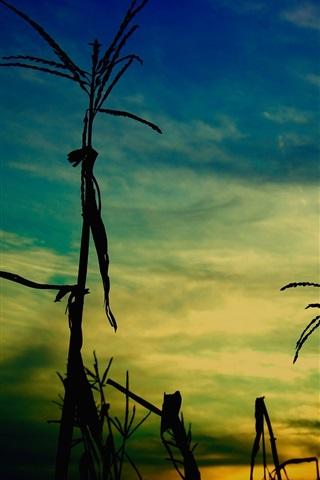 iPhone Wallpaper Grass, evening, dusk