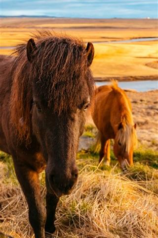 iPhone Wallpaper Horses eat grass, river