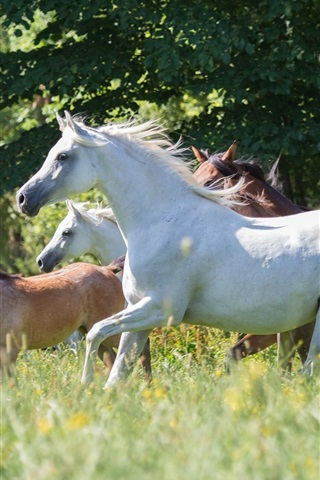 iPhone Wallpaper Horses, run, grass