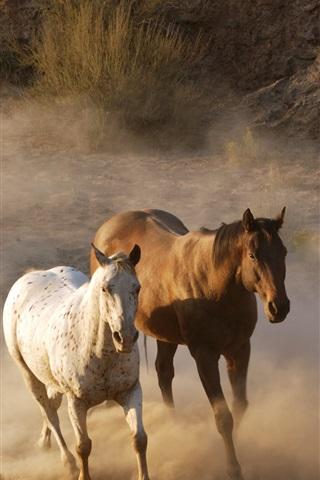iPhone Wallpaper Horses running, dust