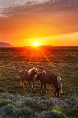iPhone Wallpaper Iceland, sunset, grass, horses