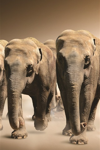 iPhone Wallpaper Many elephants walk