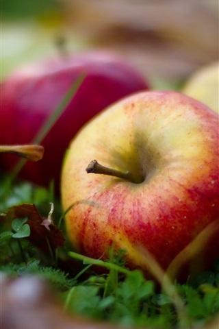 iPhone Wallpaper Mature apples, ground, leaf, grass