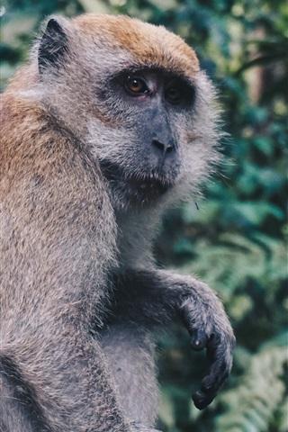 iPhone Wallpaper Monkey sit down, look