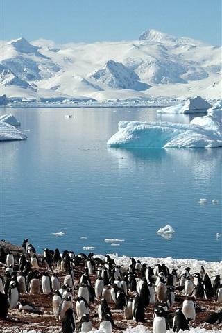 iPhone Wallpaper Penguins, sea, glaciers