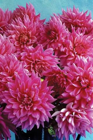 iPhone Wallpaper Pink dahlia flowers, bouquet