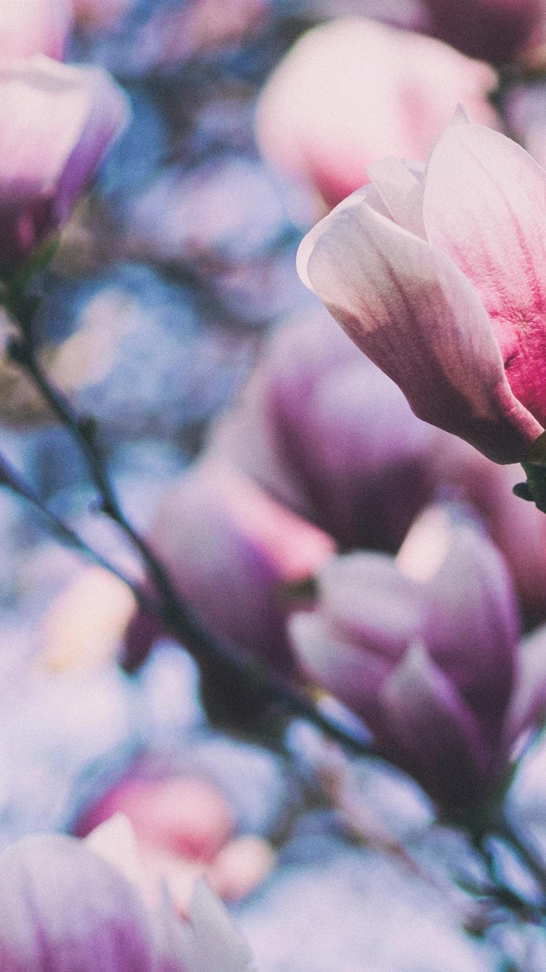 Pink Magnolia Flowers Twigs 1080x1920 Iphone 8766s Plus