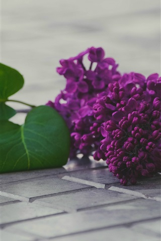 iPhone Wallpaper Purple lilac flowers, leaf