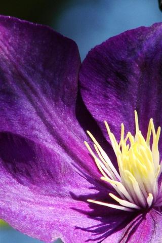iPhone Wallpaper Purple petals clematis close-up, pistil