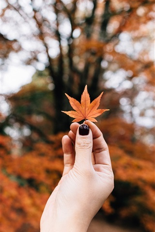 iPhone Wallpaper Red maple leaf in hand