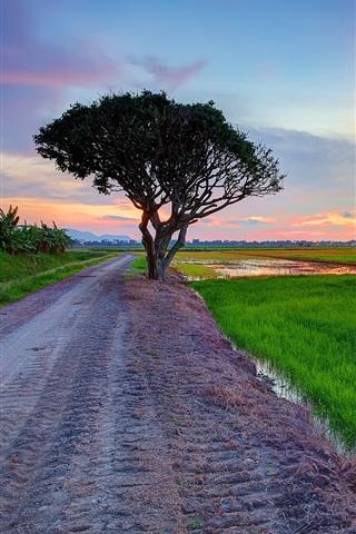 iPhone Wallpaper Road, field, grass, tree, evening