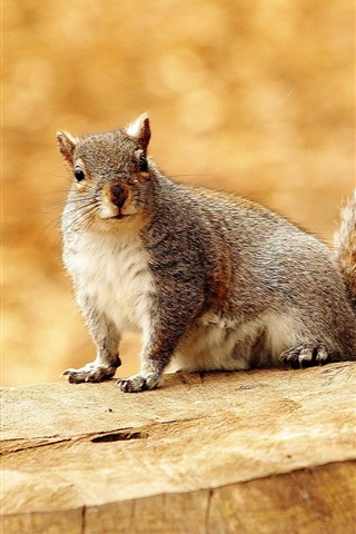iPhone Wallpaper Squirrel, stump, bokeh