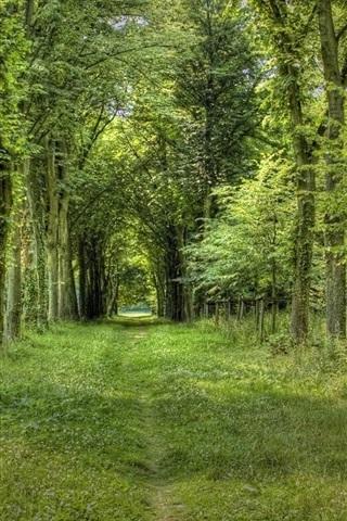 iPhone Wallpaper Summer forest, grass, green, path